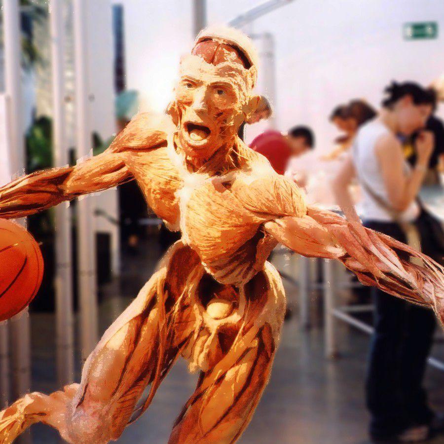 Body Worlds Basketball Man by Paul Stevenson CC by 2.0