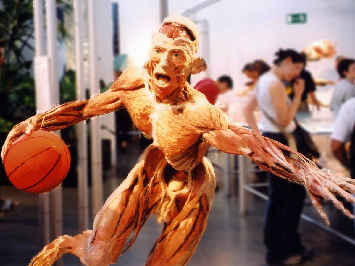 Body Worlds Basketball Man by Paul Stevenson CC by 2.0